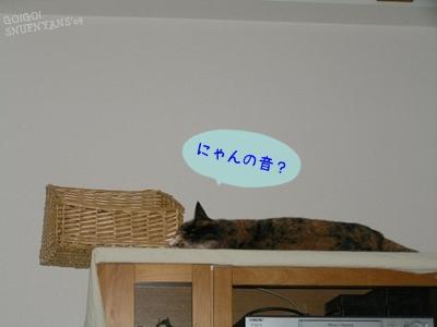 にゃんの音?