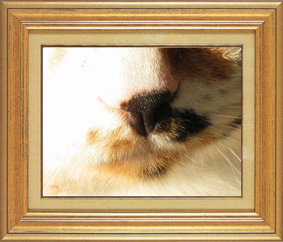 レイコさんのキラキラお鼻ねこ 猫 猫鼻祭り01番