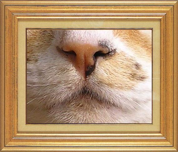 タカ君のすっきりお鼻ねこ 猫 猫鼻祭り02番