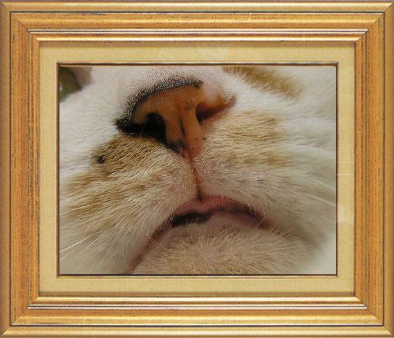 マー君のぺロッとお鼻ねこ 猫 猫鼻祭り03番