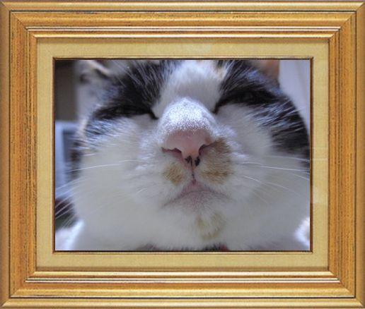 ねこ 猫 猫鼻祭り04番