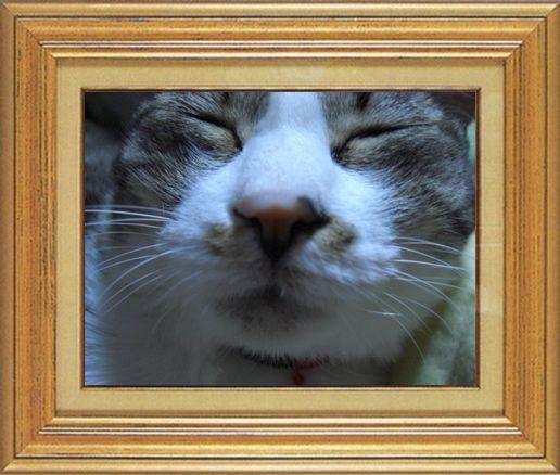 ねこ 猫 猫鼻祭り05番