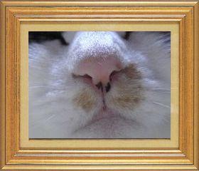 ねこ 猫 猫鼻祭り04番 mikesabaさま家タビさんの猫鼻