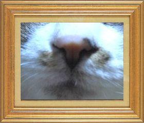 ねこ 猫 猫鼻祭り05番 mikesabaさま家チーコさんの猫鼻