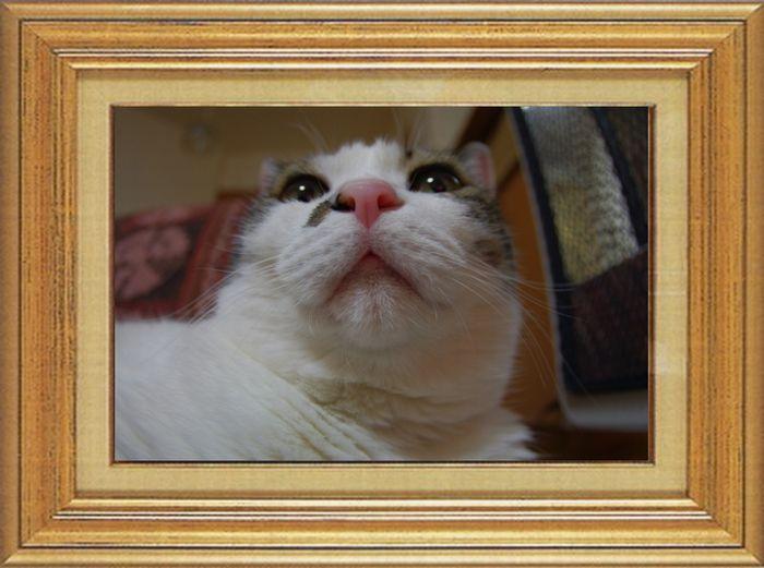ねこ 猫 猫鼻祭り06番 しも1さま家 知恵蔵さんの猫鼻