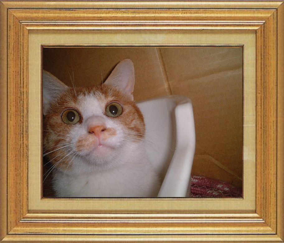 ねこ 猫 猫鼻祭り07番 金魚きんととさま家 つんちゃんのおはな