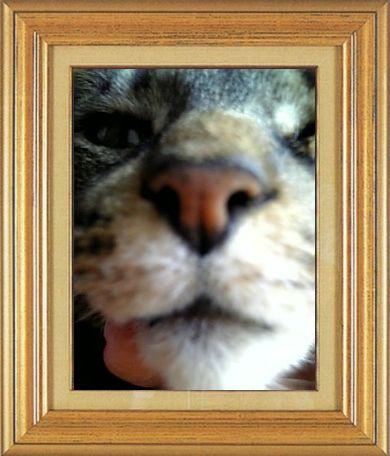 ねこ 猫 猫鼻祭り09番 女将さま家端午さんの猫鼻