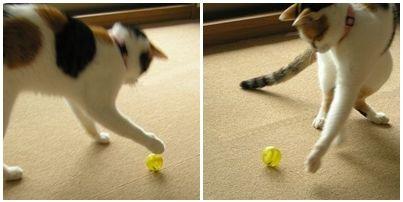 黄色のボールがお気に入り