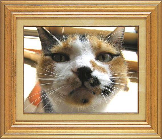 ねこ 猫 ねこ鼻祭り 11番