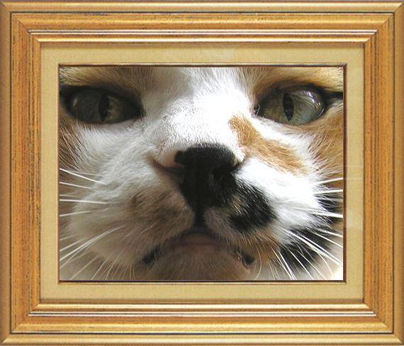 ねこ 猫 猫鼻祭り11番 すなふ家 レイコさんのはな鼻