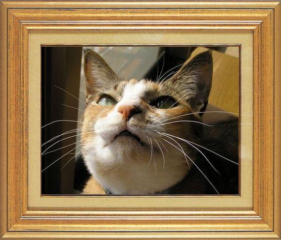 ねこ 猫 猫鼻祭り12番 すなふ家 タカ君のはな鼻