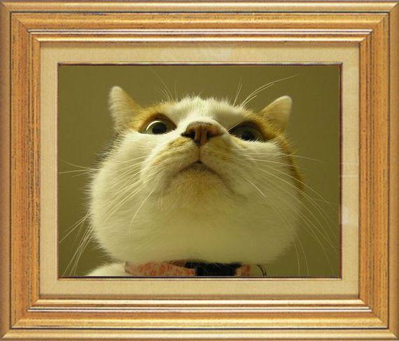 ねこ 猫 猫鼻祭り13番 すなふ家 マー君のはな鼻