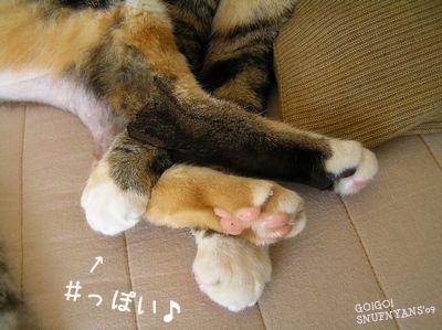 シャープな手足