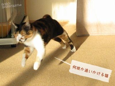 何故か追いかける猫