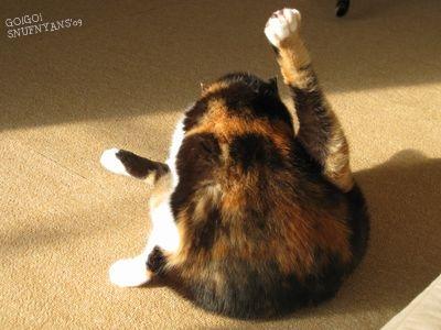 こんな状態になっている猫さんをみると