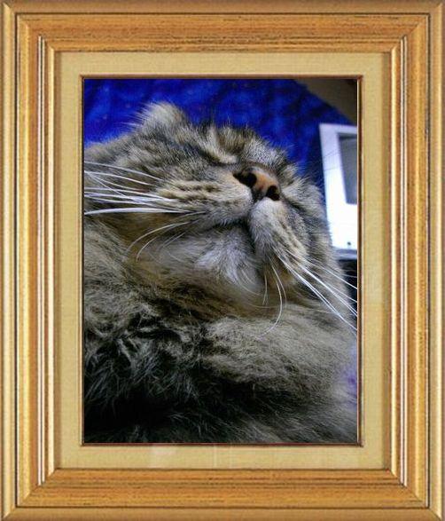 ねこ 猫 猫鼻祭り14番 ねこおばさん家狸の置物ではありません、うちのお嬢です
