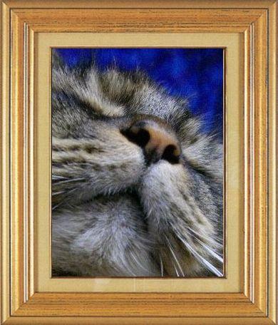 ねこ 猫 猫鼻祭り14番 ねこおばさん家狸の置物ではありません、うちのお嬢です-2