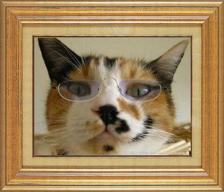 ねこ 猫 めがね祭り 01番 メガネ祭り01すなふ家レイコさん