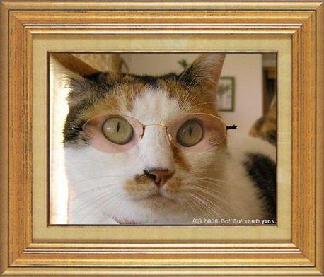 ねこ 猫 めがね祭り 02番 メガネ祭り02すなふ家マー君