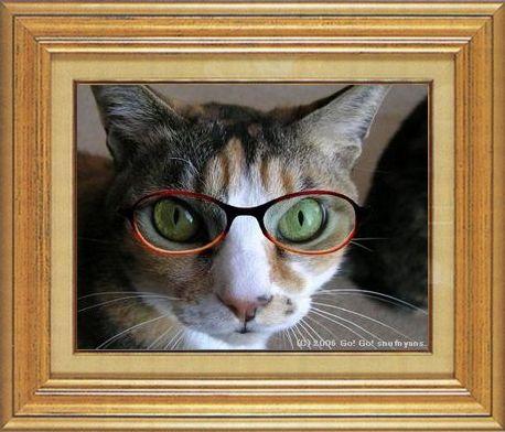 ねこ 猫 めがね祭り 03番 メガネ祭り03すなふ家タカ君