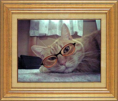 ねこ 猫 めがね祭り 04番 メガネ祭り04MAKOさま家きんさん