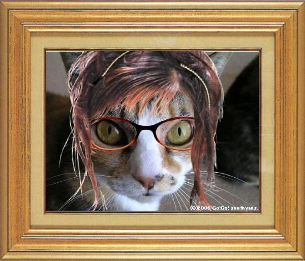 ねこ 猫 めがね祭り 07番 メガネ祭り07 すなふ家タカ君02