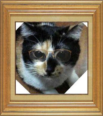 ねこ 猫 めがね祭り 10番 メガネ祭り10 ぽーちゃんままさま家ぽーちゃんさん