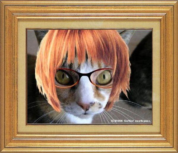 ねこ 猫 めがね祭り 12番 メガネ祭り12 すなふ家タカ君03