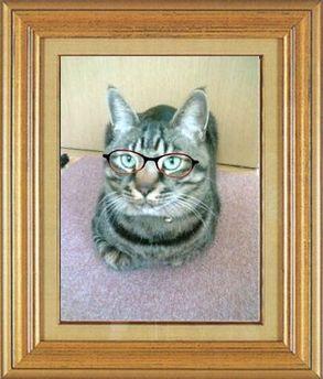 ねこ 猫 めがね祭り 13番 メガネ祭り13 ひなにゃんこ家ユズさん
