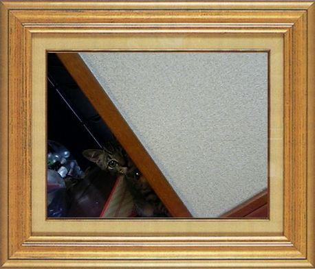 ねこ 猫 家政婦 04番 ぽーちゃんままさま家 「銀さんの家政婦は見た!」
