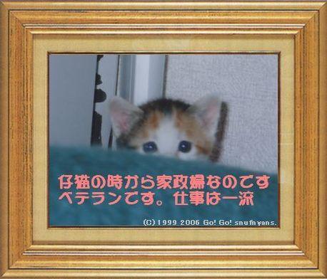 ねこ 猫 家政婦 06番 すなふ家 「マー君は仔猫の時から家政婦さ!」