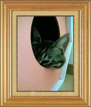 ねこ 猫 家政婦 08番 ひなにゃんこさま家 「ユズさんの家政婦は見た!」