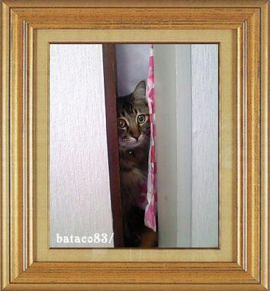 ねこ 猫 家政婦 09番 BATACOさま家 「アキラさんの家政婦は見た!」