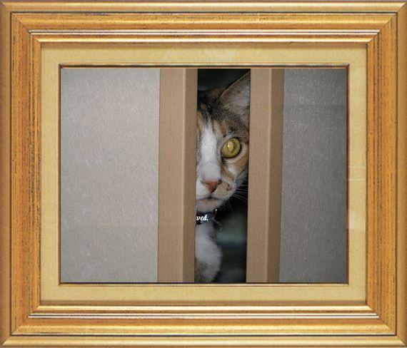 ねこ 猫 家政婦 11番 すなふ家 「たかくんの家政婦は見た!」
