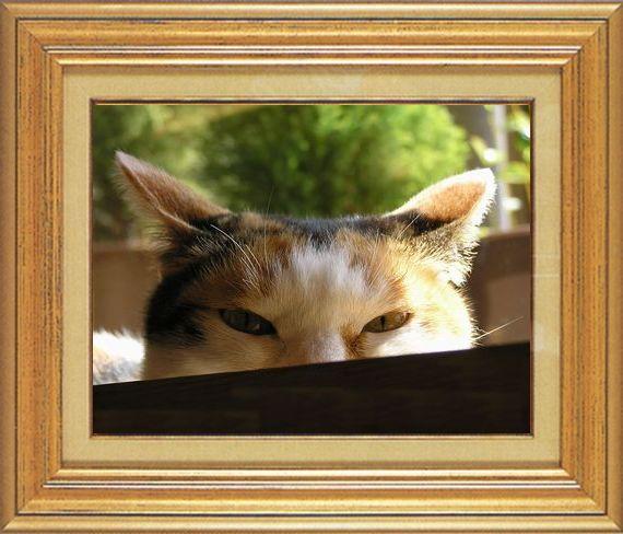 ねこ 猫 家政婦 12番 すなふ家 「まぁ~くんはみちゃった♪」