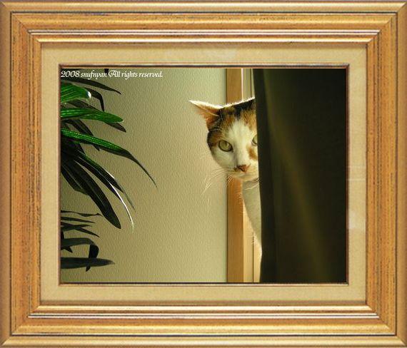 ねこ 猫 家政婦 13番 すなふ家 「まぁ~くんのFBⅡ捜査中」