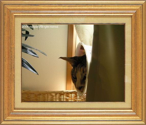 ねこ 猫 家政婦 14番 すなふ家 「たかくんのFBⅡ捜査中」