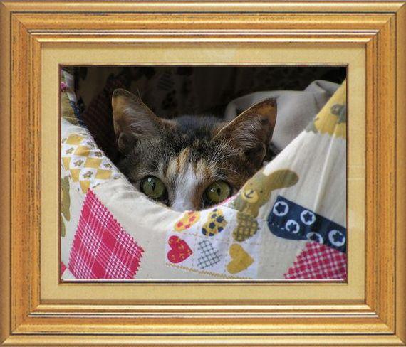 ねこ 猫 家政婦 15番 すなふ家 「たかくんのびびり~家政婦さん」