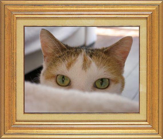 ねこ 猫 家政婦 16番 たびささま家 「ぱたさんの家政婦さんまつり」