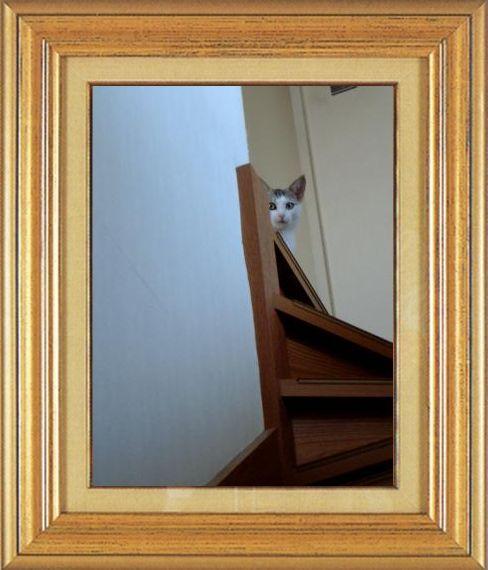 ねこ 猫 家政婦 18番 まやさま家 「市原だい子」