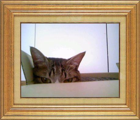 ねこ 猫 家政婦 19番 つんきんかあちゃんさま家 「あれが恐怖のかあちゃんのダンスですか・・・」