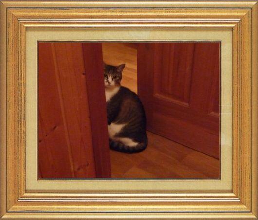 ねこ 猫 家政婦 20番 つんきんかあちゃんさま家 「家政婦つんは2度見た!」
