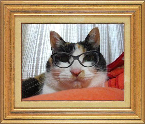 ねこ 猫 めがね祭り 16番 メガネ祭り16 mikesabaさま家タビさんのめがね顔