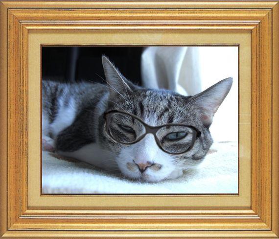ねこ 猫 めがね祭り 17番 メガネ祭り17 mikesabaさま家チーコさんのめがね顔