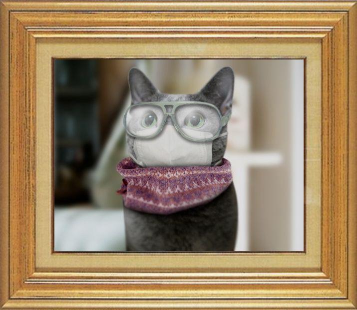 ねこ 猫 めがね祭り 18番 メガネ祭り18 やらいちょうさま家「眼鏡みどり」