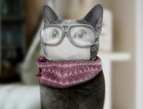 やらいちょうさま家「眼鏡みどり」さん