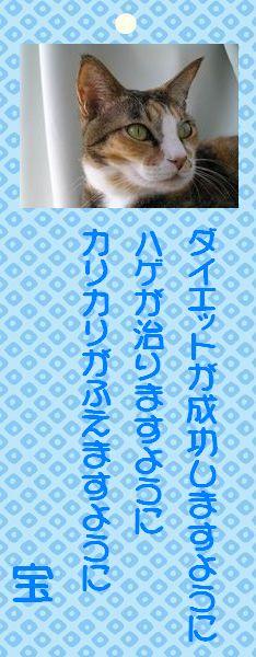 七夕祭り 03 タカ君の願い事