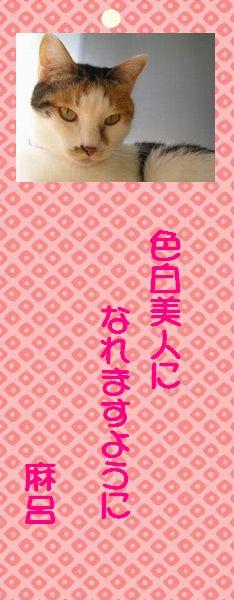 七夕祭り 04 マー君の願い事
