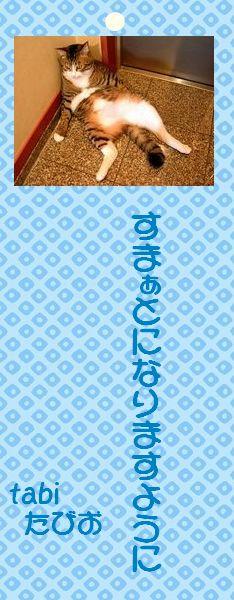 七夕祭り 05 tabiたびおさんの短冊