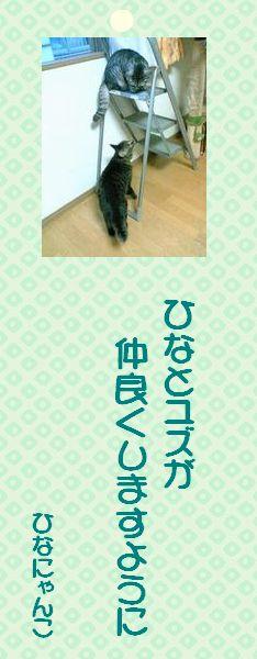 七夕祭り 06 ひなにゃんこさまの短冊